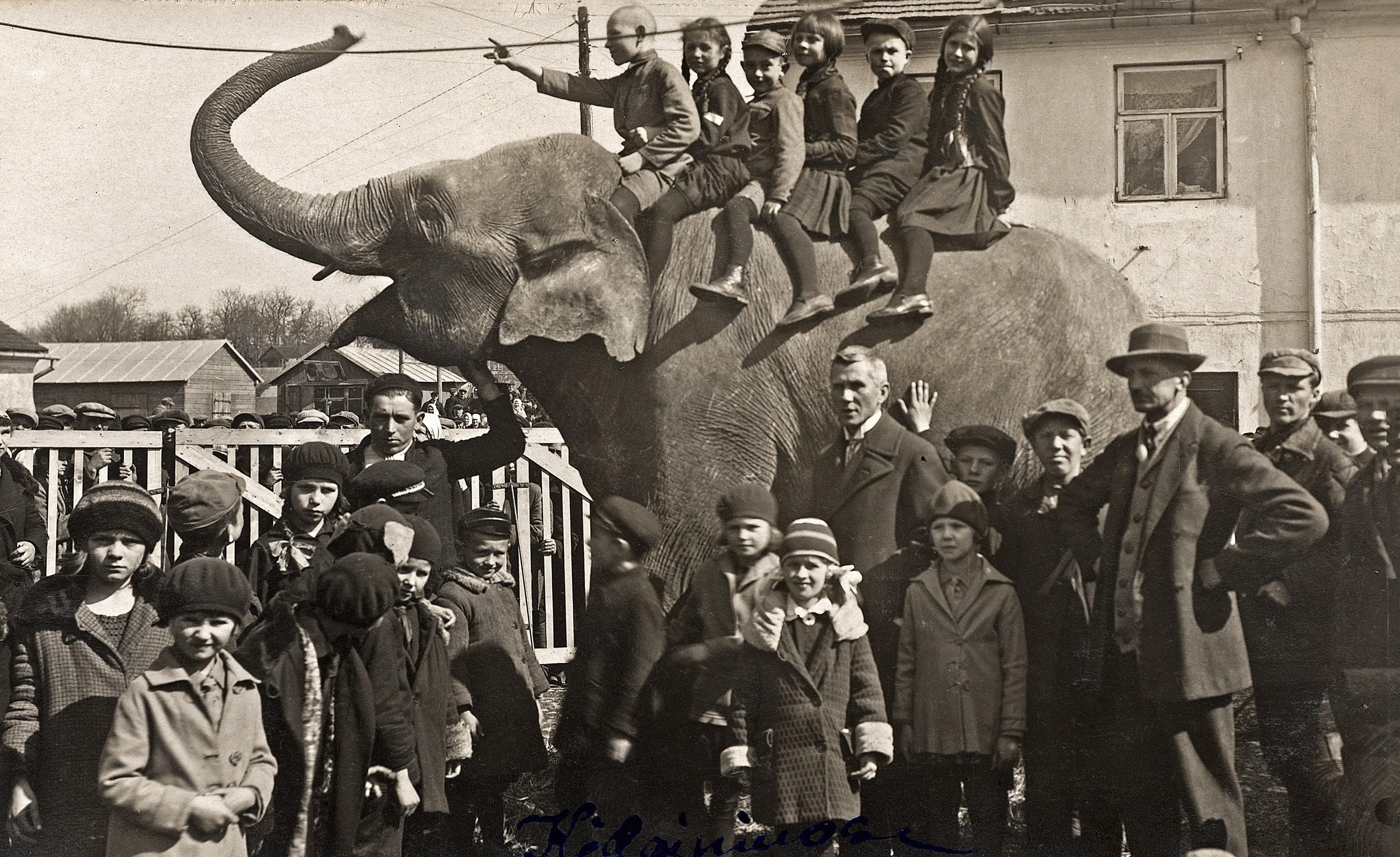 Mokytojas Tijūnaitis su mokiniais prie cirko dramblio